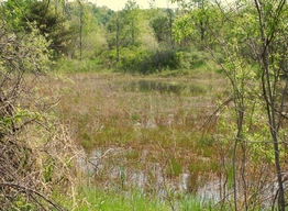 Lower Grand River Wetland